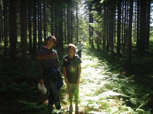 Sommerstemning i granskogen